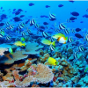 Thumbnail image for Largest Living Structure: The Great Barrier Reef