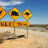 Thumbnail image for 10 Ideas for Road Tripping in Australia