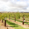 Thumbnail image for Visit the Barossa Valley: Australia's Premier Wine Growing Region