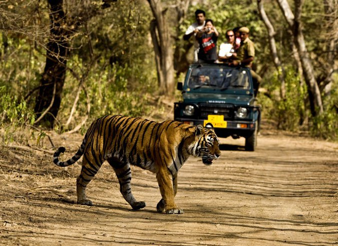 Jeep safari in Jim Corbett National Park, India