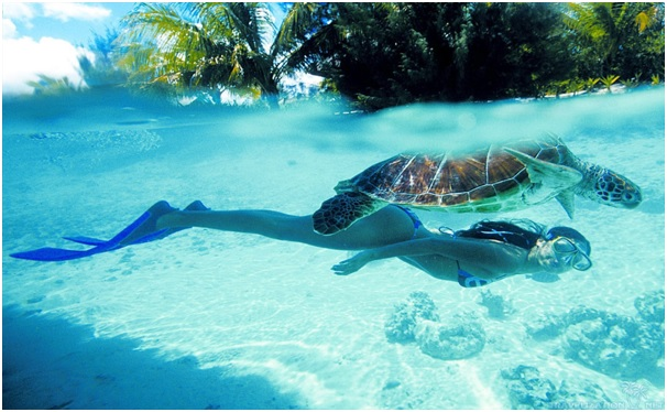 Swimming with turtles in Tahiti