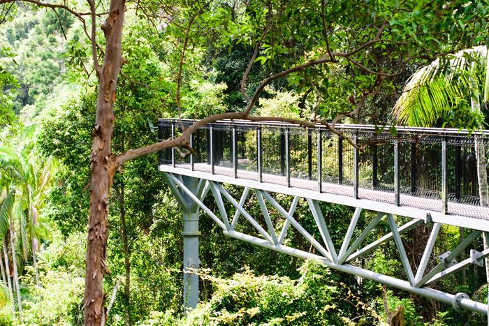 Tamborine Rainforest Walk, Gold Coast