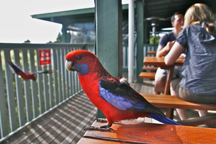 Lamington National Park, Gold Coast