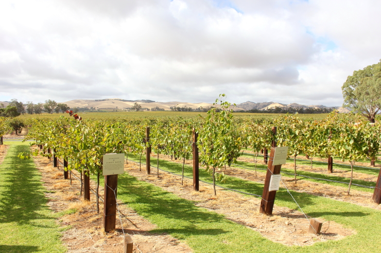 Post image for Visit the Barossa Valley: Australia's Premier Wine Growing Region